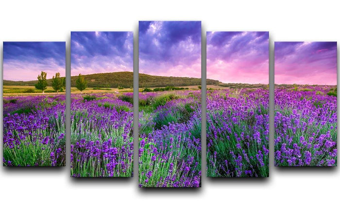 Sunset over a summer lavender field 5 Split Panel Canvas