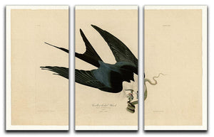 Swallow tailed Hawk by Audubon 3 Split Panel Canvas Print - Canvas Art Rocks - 1