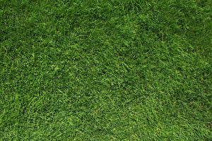 Texture of green grass Wall Mural Wallpaper - Canvas Art Rocks - 1