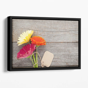 Three colorful gerbera flowers Floating Framed Canvas