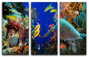 Tropical Anthias fish with net fire corals and shark on Red Sea reef 3 Split Panel Canvas Print - Canvas Art Rocks - 1