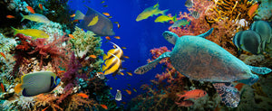 Tropical Anthias fish with net fire corals and shark on Red Sea reef Wall Mural Wallpaper - Canvas Art Rocks - 1