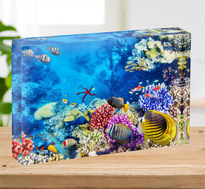Tropical fish Acrylic Block - Canvas Art Rocks - 2