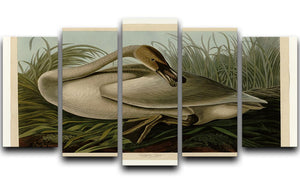 Trumpeter_Swan by Audubon 5 Split Panel Canvas - Canvas Art Rocks - 1