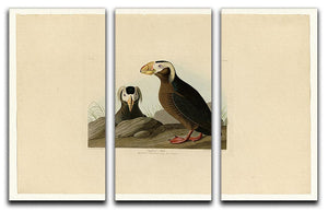 Tufted Auk by Audubon 3 Split Panel Canvas Print - Canvas Art Rocks - 1