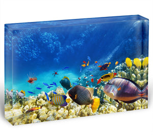 Underwater world Acrylic Block - Canvas Art Rocks - 1
