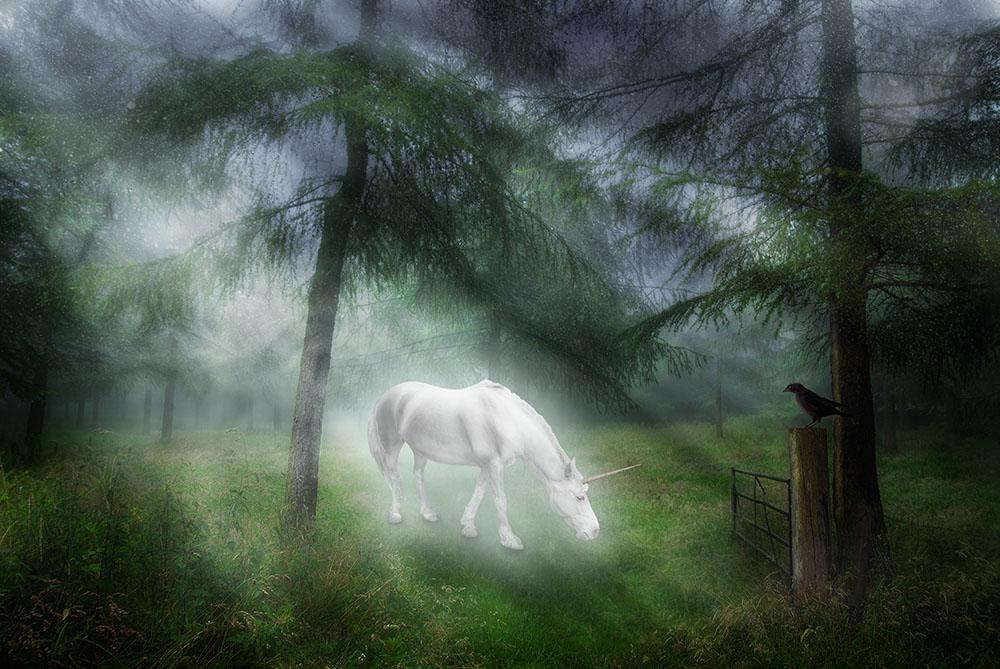Unicorn In A Magical Forest Wall Mural Wallpaper