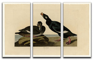 Velvet Duck by Audubon 3 Split Panel Canvas Print - Canvas Art Rocks - 1