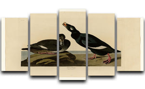Velvet Duck by Audubon 5 Split Panel Canvas - Canvas Art Rocks - 1