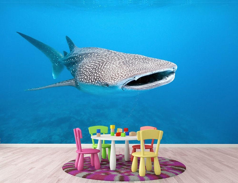 Whale shark Wall Mural Wallpaper - Canvas Art Rocks - 1