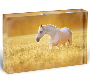 White Orlov trotter horse in rye Acrylic Block - Canvas Art Rocks - 1