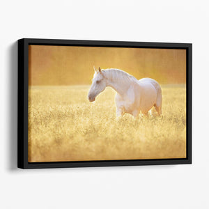 White Orlov trotter horse in rye Floating Framed Canvas - Canvas Art Rocks - 1