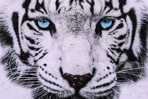 White Tiger Face Wall Mural Wallpaper - Canvas Art Rocks - 1