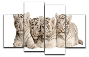 White Tiger cubs 2 months 4 Split Panel Canvas - Canvas Art Rocks - 1