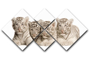 White Tiger cubs 2 months 4 Square Multi Panel Canvas - Canvas Art Rocks - 1
