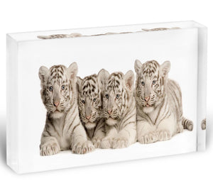 White Tiger cubs 2 months Acrylic Block - Canvas Art Rocks - 1