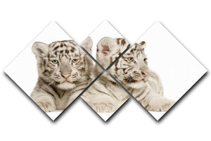 White Tiger cubs 4 Square Multi Panel Canvas - Canvas Art Rocks - 1