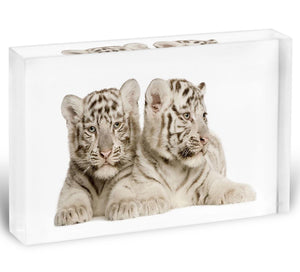 White Tiger cubs Acrylic Block - Canvas Art Rocks - 1