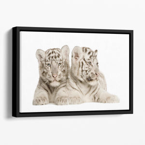 White Tiger cubs Floating Framed Canvas - Canvas Art Rocks - 1