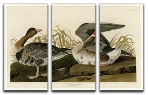 White fronted Goose by Audubon 3 Split Panel Canvas Print - Canvas Art Rocks - 1