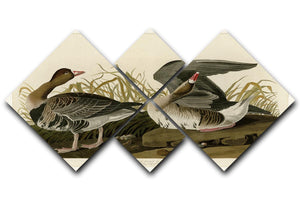 White fronted Goose by Audubon 4 Square Multi Panel Canvas - Canvas Art Rocks - 1
