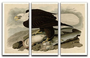 White headed Eagle by Audubon 3 Split Panel Canvas Print - Canvas Art Rocks - 1