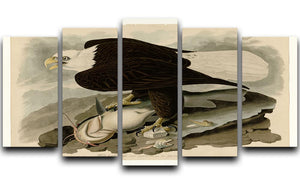 White headed Eagle by Audubon 5 Split Panel Canvas - Canvas Art Rocks - 1