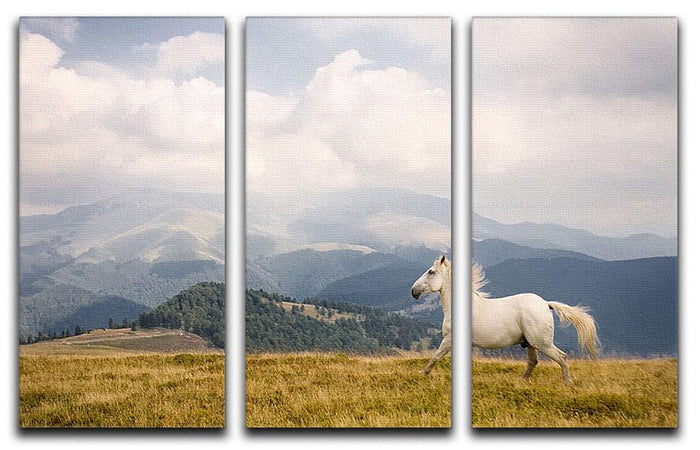 White horse 3 Split Panel Canvas Print