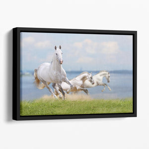 White horses running near water Floating Framed Canvas - Canvas Art Rocks - 1