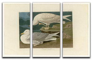 White winged silvery Gull by Audubon 3 Split Panel Canvas Print - Canvas Art Rocks - 1