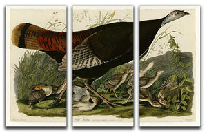 Wild Turkey 2 by Audubon 3 Split Panel Canvas Print - Canvas Art Rocks - 1