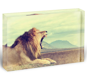 Wild african lion Acrylic Block - Canvas Art Rocks - 1