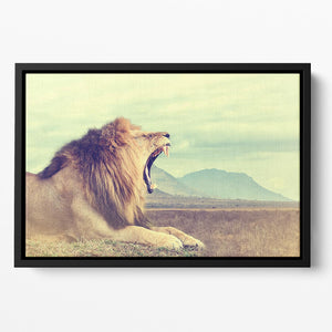 Wild african lion Floating Framed Canvas - Canvas Art Rocks - 2