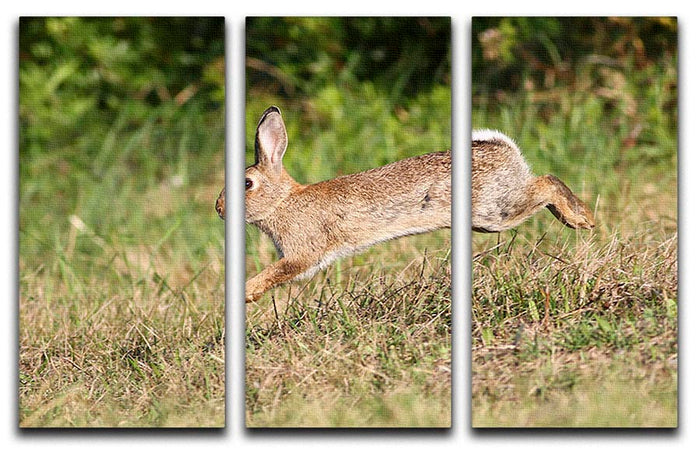 Wild cute rabbit is jumping on meadow 3 Split Panel Canvas Print