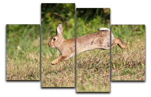 Wild cute rabbit is jumping on meadow 4 Split Panel Canvas - Canvas Art Rocks - 1