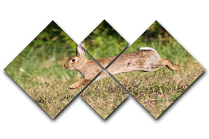 Wild cute rabbit is jumping on meadow 4 Square Multi Panel Canvas - Canvas Art Rocks - 1