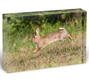 Wild cute rabbit is jumping on meadow Acrylic Block - Canvas Art Rocks - 1