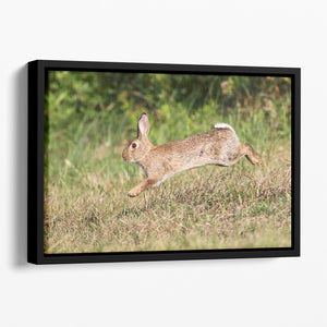 Wild cute rabbit is jumping on meadow Floating Framed Canvas - Canvas Art Rocks - 1
