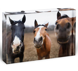 Wild horses on the meadow at spring time Acrylic Block - Canvas Art Rocks - 1