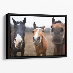 Wild horses on the meadow at spring time Floating Framed Canvas - Canvas Art Rocks - 1