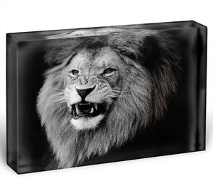 Wild lion portrait in black and white. Acrylic Block - Canvas Art Rocks - 1