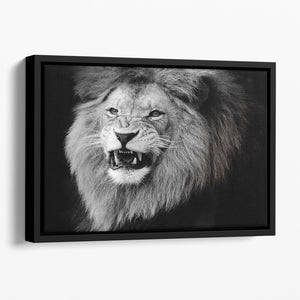 Wild lion portrait in black and white. Floating Framed Canvas - Canvas Art Rocks - 1