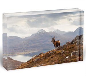 Wild stag overlooking Loch Torridon Acrylic Block - Canvas Art Rocks - 1