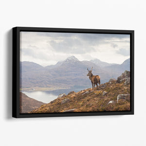 Wild stag overlooking Loch Torridon Floating Framed Canvas - Canvas Art Rocks - 1
