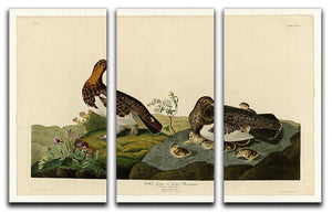 Willow Grouse by Audubon 3 Split Panel Canvas Print - Canvas Art Rocks - 1