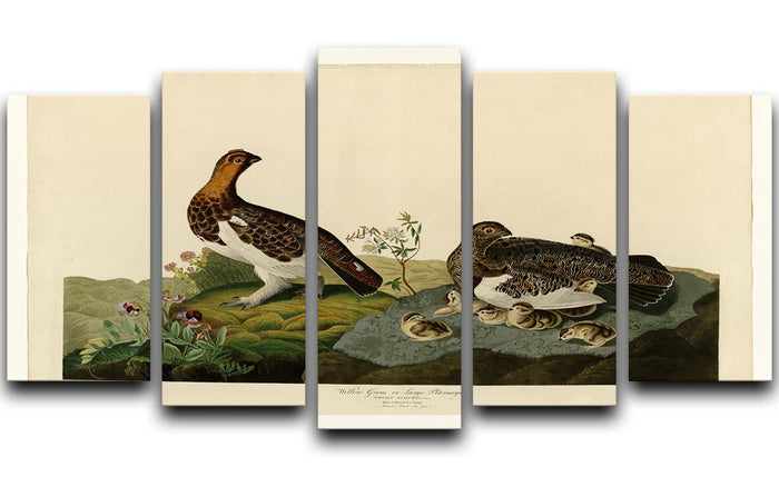 Willow Grouse by Audubon 5 Split Panel Canvas