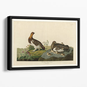 Willow Grouse by Audubon Floating Framed Canvas