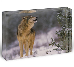 Wolf Howling in Snow Acrylic Block - Canvas Art Rocks - 1