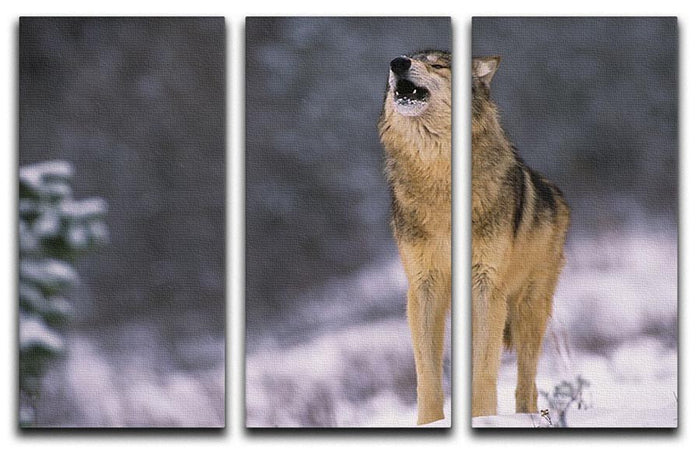 Wolf Howling in White Snow 3 Split Panel Canvas Print