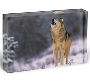 Wolf Howling in White Snow Acrylic Block - Canvas Art Rocks - 1